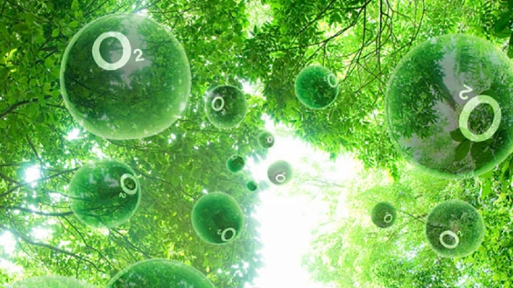 fotosintez