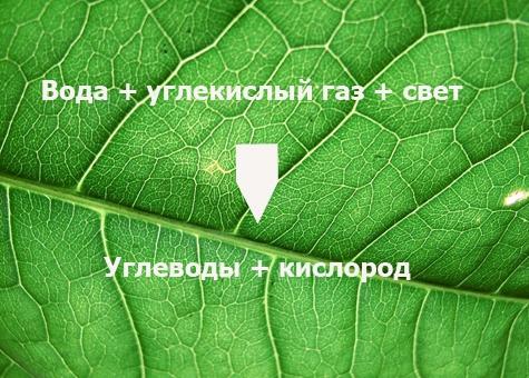 fotosintez-1